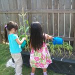 Sugar Mill Montessori gardening